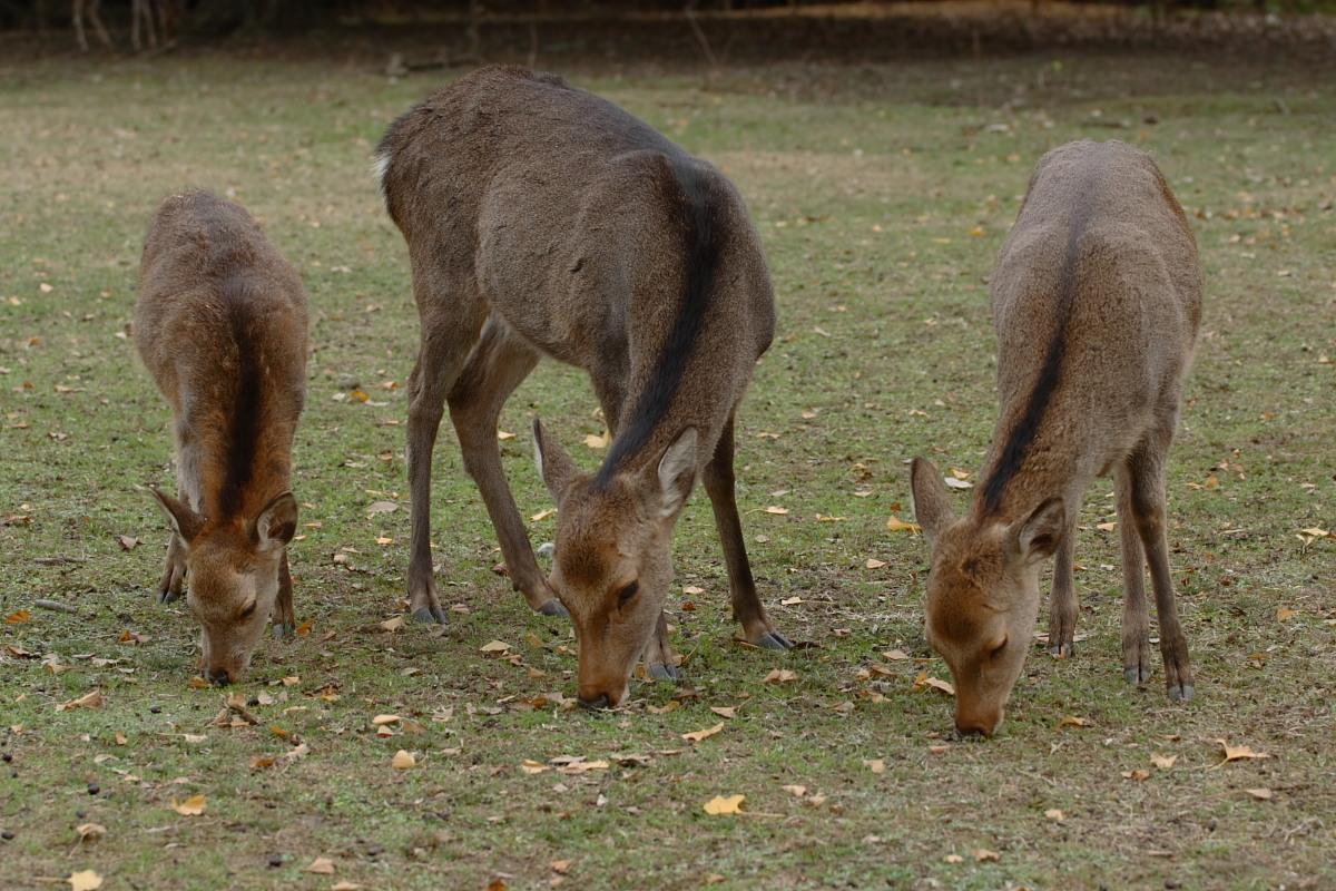 奈良公園 4  <キスキスキス>_f0021869_132557100.jpg