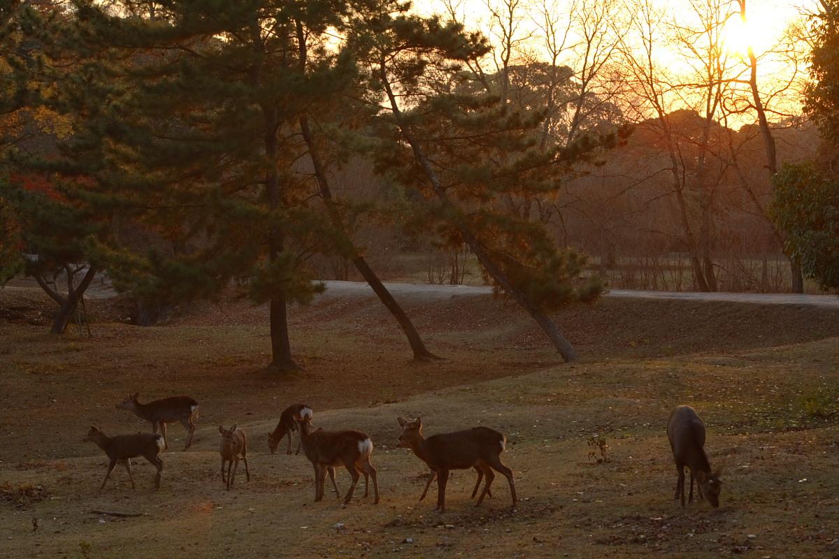 奈良公園 4  <キスキスキス>_f0021869_13272927.jpg