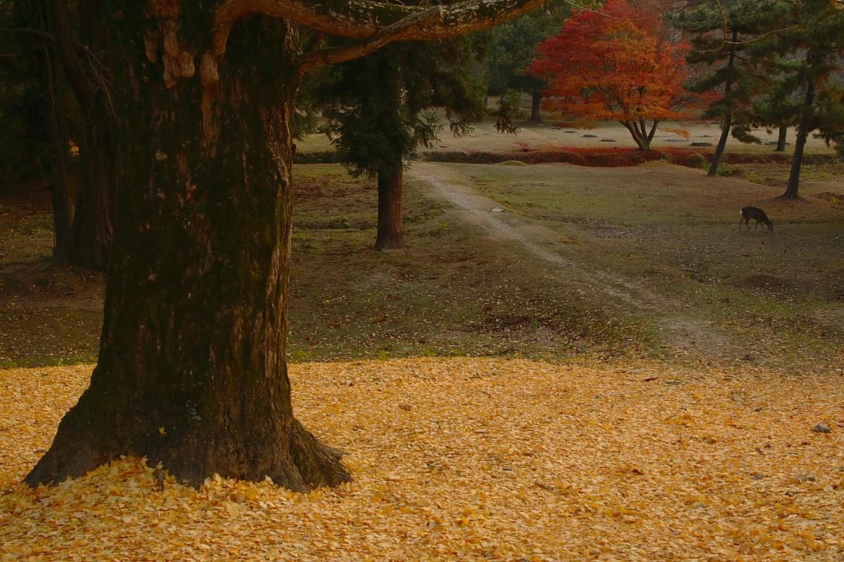 奈良公園 4  <キスキスキス>_f0021869_13275994.jpg