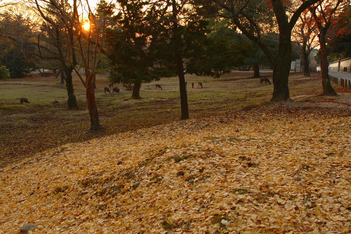 奈良公園 4  <キスキスキス>_f0021869_13283762.jpg