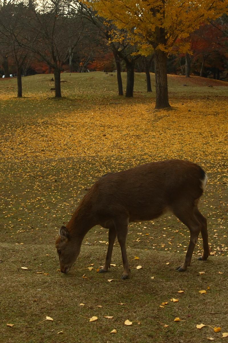 奈良公園 2_f0021869_134475.jpg