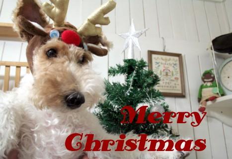 Merry Christmas!_c0070377_024508.jpg