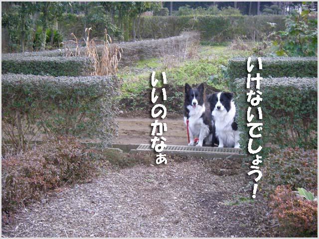 f0114893_1821351.jpg