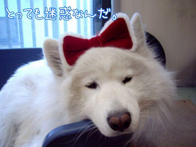 『東京ピカピカ案内』 おわり_c0062832_16231884.jpg