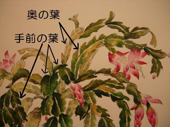 シャコバサボテンの花_b0089338_416080.jpg