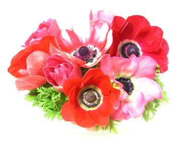 お花をポチッとしても投票できます♪