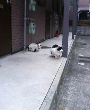 関西弁の猫でんねん。      (ネコのネドコはドコ?)_d0083265_1637483.jpg