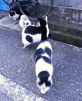 関西弁の猫でんねん。      (ネコのネドコはドコ?)_d0083265_1654412.jpg