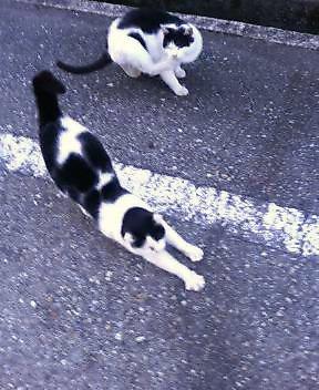 関西弁の猫でんねん。      (ネコのネドコはドコ?)_d0083265_1743375.jpg