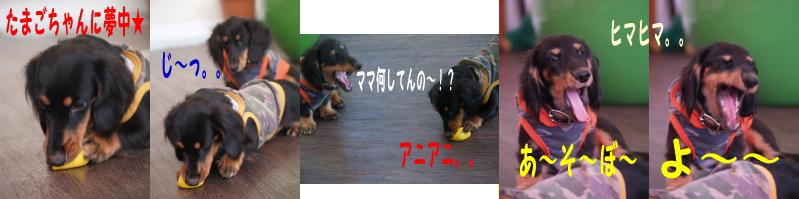d0045212_045758.jpg