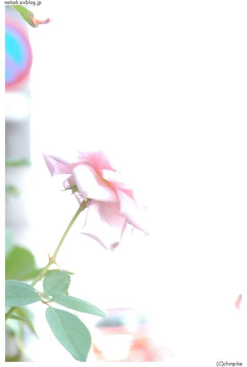 b0001124_556533.jpg