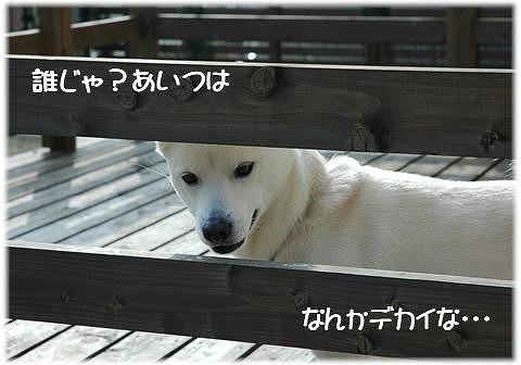 a0047325_2141891.jpg