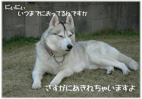 a0047325_2451417.jpg