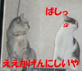 f0002743_155401.jpg