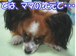f0011845_1205597.jpg