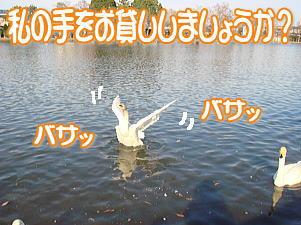 f0011845_1212740.jpg