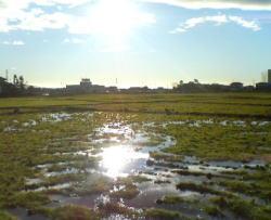 雨上がりの田んぼ_c0067646_17584646.jpg