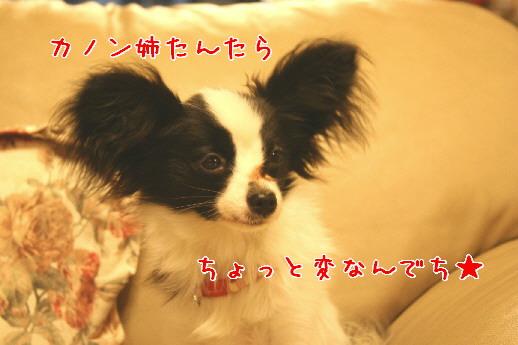 d0013149_1244322.jpg
