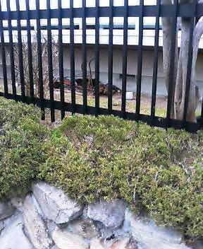 関西弁の猫でんねん。      (ネコのネドコはドコ?)_d0083265_14235284.jpg