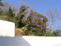 葉山Y邸 ローテク合成写真_d0017039_116784.jpg