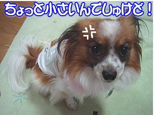 f0011845_18303444.jpg