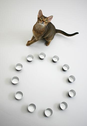 [猫的]粘り勝ち_e0090124_8451399.jpg