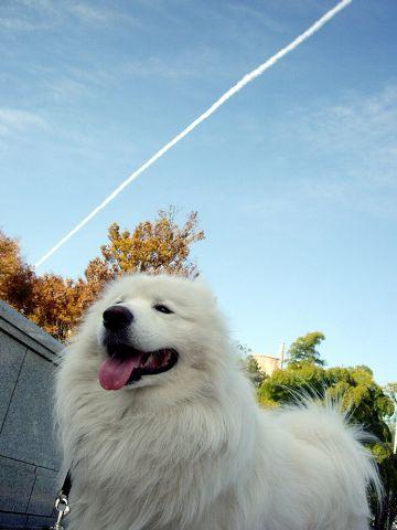 飛行機雲_c0062832_1712888.jpg