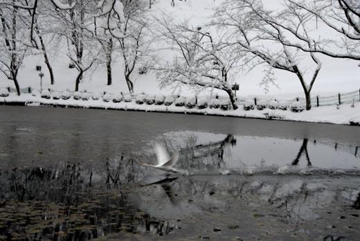 初雪Ⅰ_c0093046_1734697.jpg