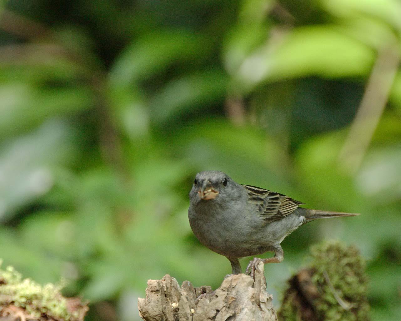 今年最後の関東での鳥見は縁起の良いクロジ_f0105570_14162254.jpg