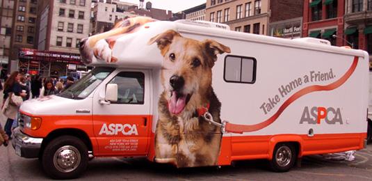 老舗の動物愛護団体 ASPCA _b0007805_23535011.jpg