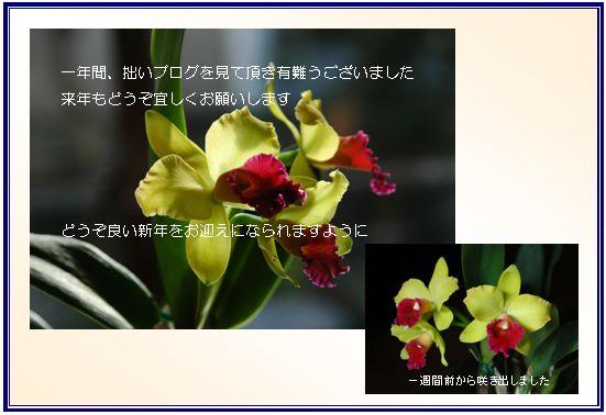 c0051105_1153450.jpg