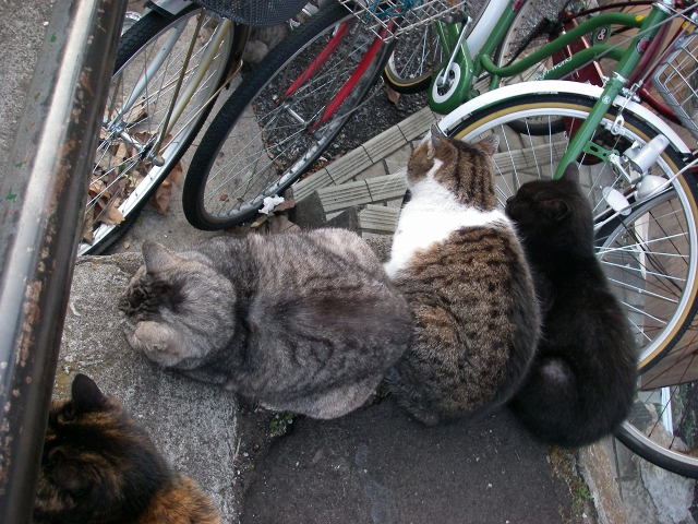 谷中の猫 下町の旅_f0050534_19544068.jpg