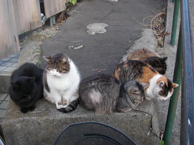 谷中の猫 下町の旅_f0050534_19545668.jpg