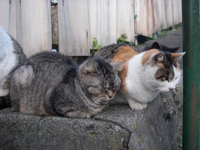 谷中の猫 下町の旅_f0050534_19551416.jpg