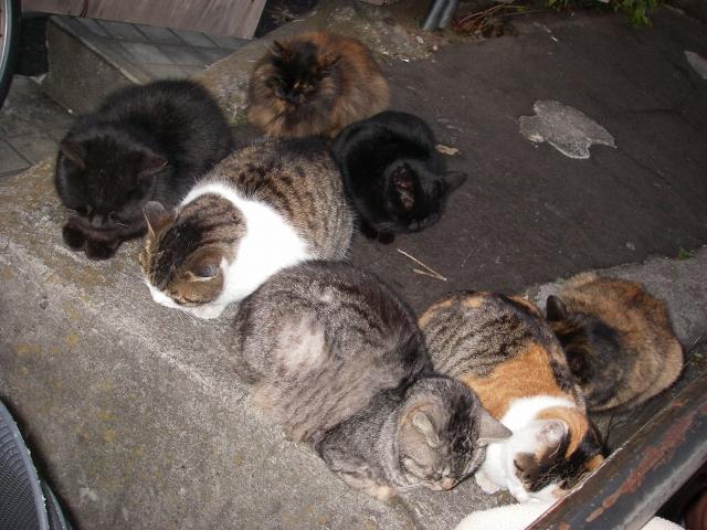 谷中の猫 下町の旅_f0050534_19554421.jpg