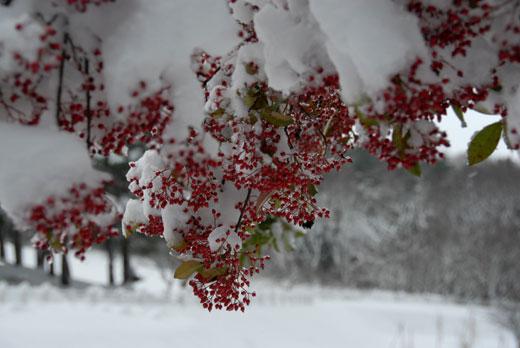 初雪Ⅱ (18.12.29撮影)_c0093046_914032.jpg