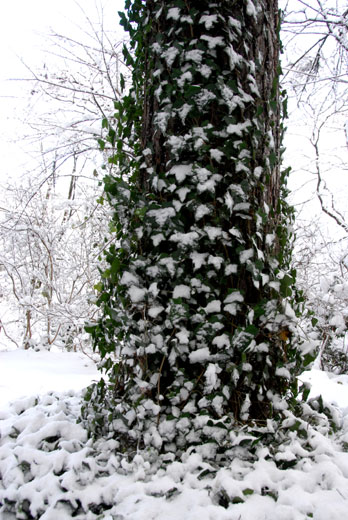 初雪Ⅱ (18.12.29撮影)_c0093046_9142910.jpg