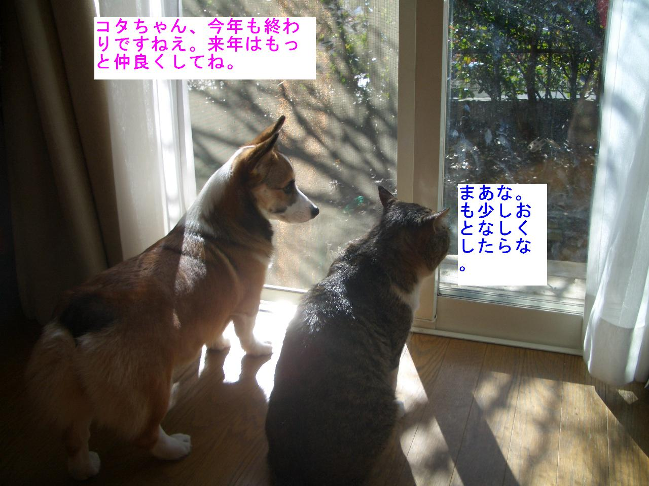 f0101201_2155130.jpg