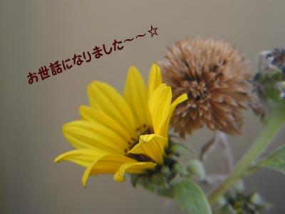 a0041508_1725415.jpg