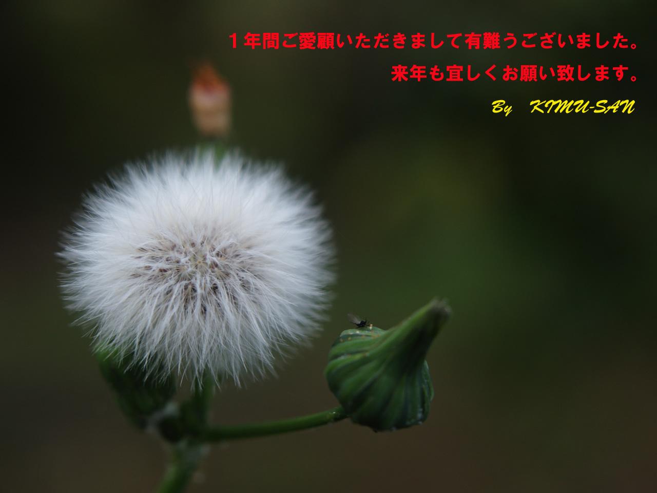 c0050380_19462735.jpg