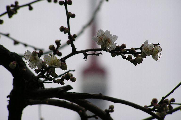 東京タワー見えます