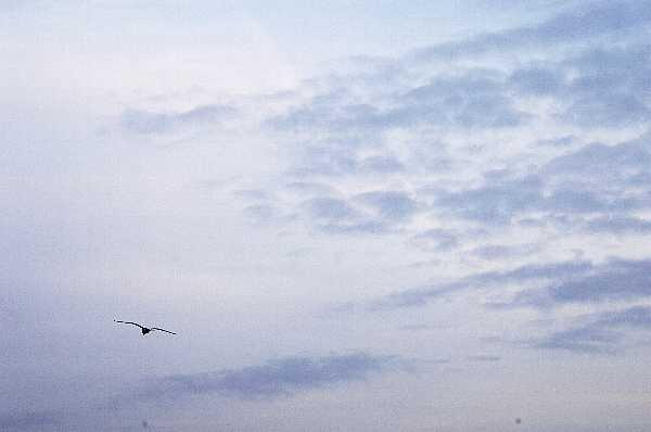 静岡県御前崎市の灯台のふもとの海岸です。カモメが強風にもかかわらずに元気に空を飛んでいて、背景はすべて空になってます。今年もよろしくお願いいたします!