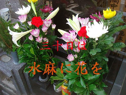 b0091575_0231232.jpg