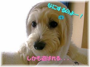f0039907_1363546.jpg