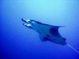 ヤップの海からHappy New Year!_a0043520_1175992.jpg