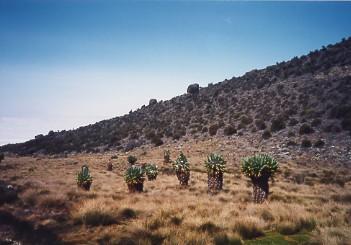 キリマンジャロ登頂記 (4) ホロンボ・ハット(3720m)へ_c0011649_1120476.jpg