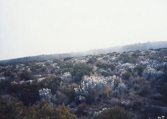 キリマンジャロ登頂記 (4) ホロンボ・ハット(3720m)へ_c0011649_11253519.jpg