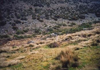 キリマンジャロ登頂記 (4) ホロンボ・ハット(3720m)へ_c0011649_11282644.jpg