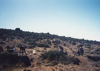 キリマンジャロ登頂記 (4) ホロンボ・ハット(3720m)へ_c0011649_11303494.jpg