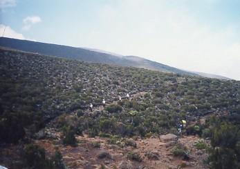 キリマンジャロ登頂記 (4) ホロンボ・ハット(3720m)へ_c0011649_1131252.jpg